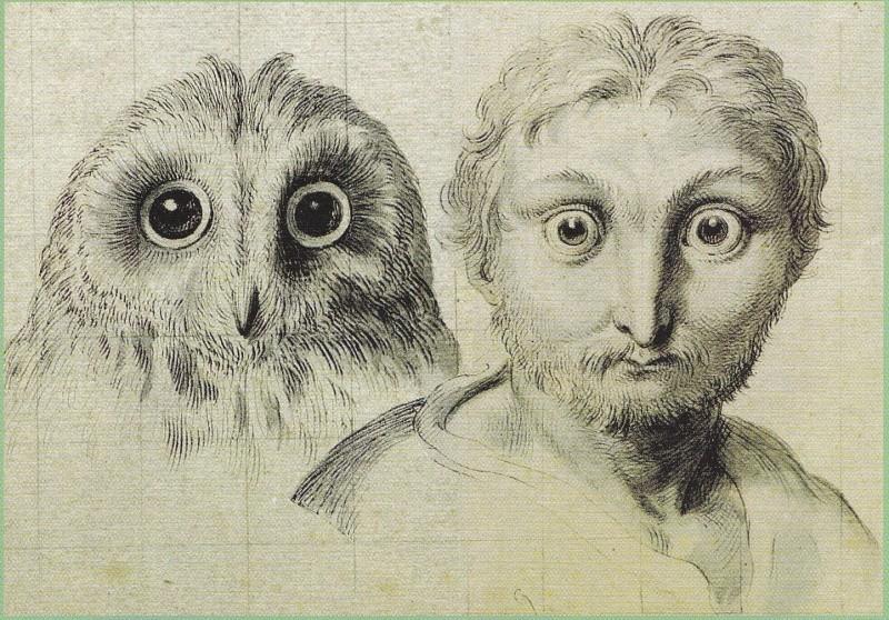 Tête physiognomonique inspirée par une chouette, vers 1670. Musée du Louvre.