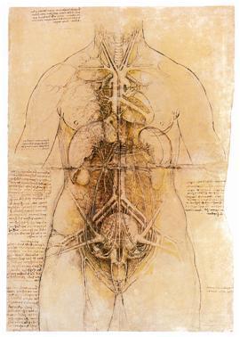 列奥纳多•达•芬奇,心血管系统和女人的主要器官, 1509年至1510年。 黑色和红色的粉笔,墨水,黄色涂料,46.7 X33.2厘米。 皇家收藏。