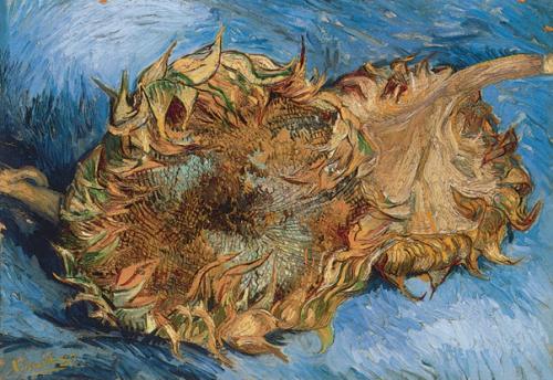 《向日葵》,巴黎,1887年8-9月。帆布油画,43.2x61cm. 大都会美术馆,纽约。